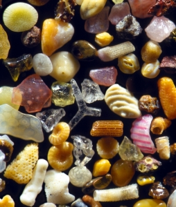 Grains of sand under the microscope and lend of Dr. Gary Greenberg